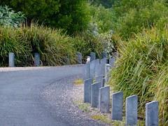 We spot a Kookaburra on the posts (TrekSnappy) Tags: australia roadtrip queensland springbrooknationalpark