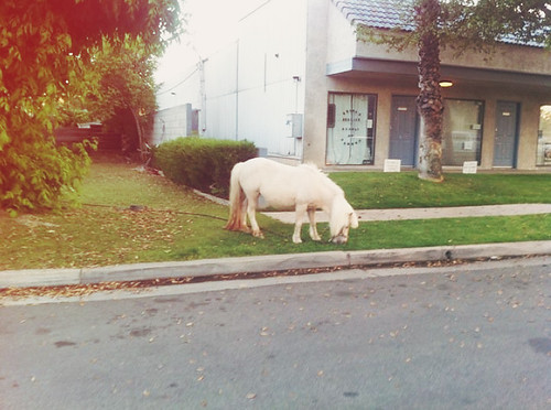these are the horses in my neighborhood