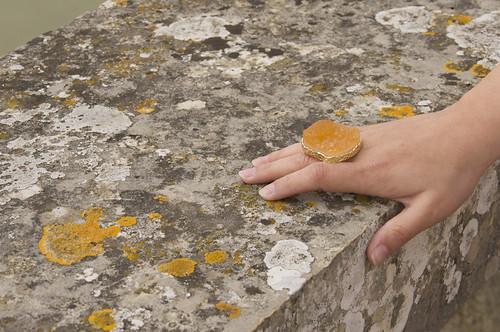 rocks & lichens