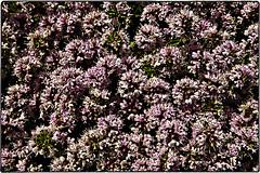 ... SDIM8639 (*melkor*) Tags: flowers sun art nature season geotagged spring colours experiment ground minimal conceptual springhassprung melkor trashbit justbeyondmyshoesproject