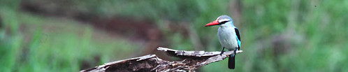 Birding in Kenya, Bird Watching in Kenya, Ornithological Safaris