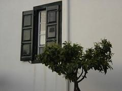 WINDOW TO THE NATURE (dimitra_milaiou) Tags: tree window lines architecture grey one 1 living europe sony hellas greece minimalism parallel dimitra galaxidi dscp93a   milaiou