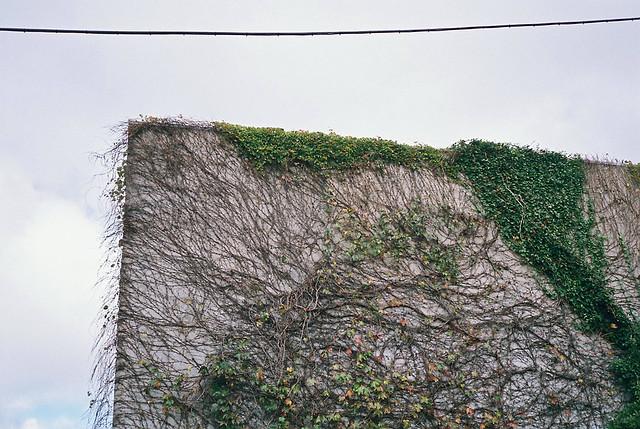 mju_the_wall
