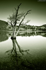 Reflections (.Brian Kerr Photography.) Tags: tree water canon reflections portland landscape mono nationalpark smooth lakes lakedistrict duke cumbria boathouse ullswater splittone pooleybridge cumbrian of eos5dmkii briankerrphotography