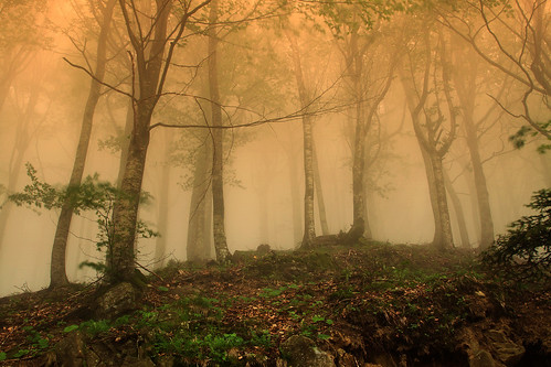 Fog in June [Explore] by David Butali (Dylan@66)