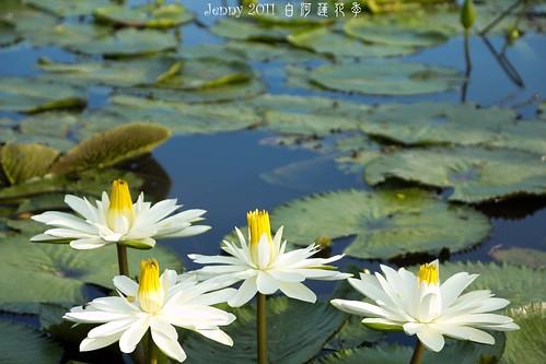 20110620白河蓮花季-5643