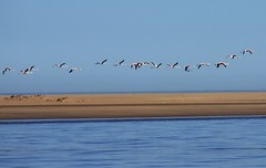 between the sky and the sea (p.spaggiari) Tags: africa mare cielo namibia animali