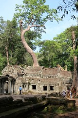 IMG_2059a - Typical Jungle Incursion at Ta Prohm, Siem Reap, Cambodia (Wayne W G) Tags: asia southeastasia cambodia taprohm temple ruin ruins siemreap tree trees flora root roots jungle