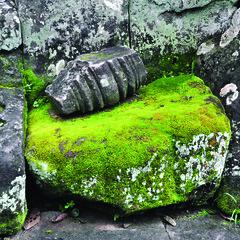 111025 Angkor Stone and Moss (BavarIndia) Tags: asia tika