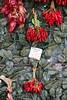 Chilli (Jon Southcoasting) Tags: italy chilli locorotundo red peperoncini pepper