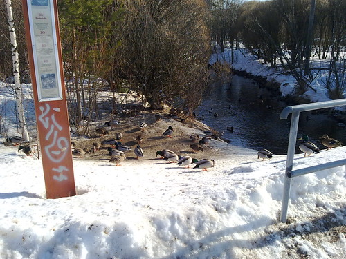 Ducks and Urban Art by bebraw