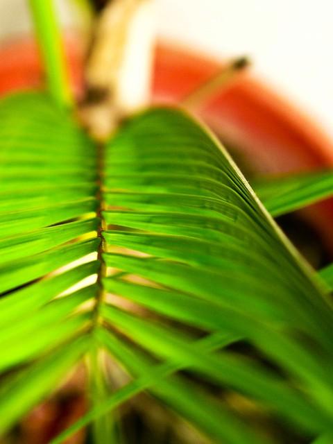 IMG_1617 Palm Leave - 棕榈叶,青色
