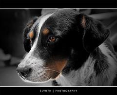 Soledad (Rene Elyuth Castillejos) Tags: perro ojos mascotas abandono sonyalpha700