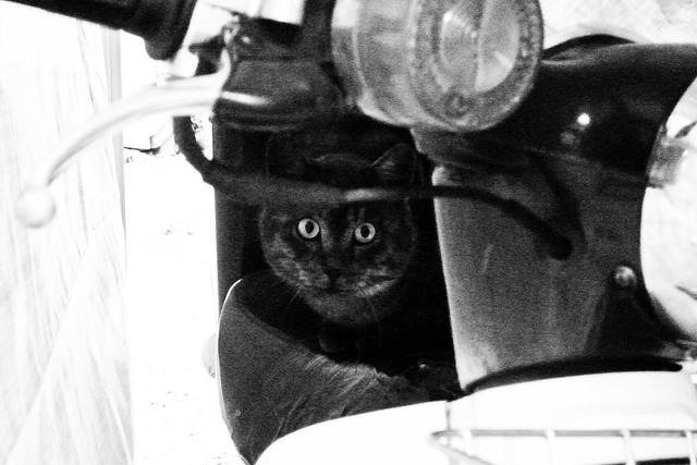 Today's Cat@2011-04-04