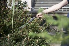 Watering the plants (britishmuseum) Tags: london kew garden australia britishmuseum australianlandscape australialandscape