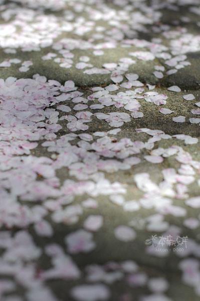 脫枝的花瓣