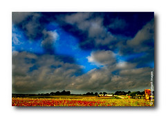 Cnh ng Xun / No.5 (HoangHuyManh images) Tags: travel usa texas bluebonnet brenham flickrgoldaward flickrsilveraward platinumheartaward yourarthastouchedtheworld platinumbestshot doublyniceshot doubleniceshot mygearandme mygearandmepremium mygearandmebronze hoanghuymanhimages level1photographyforrecreation level3photographyforrecreation level4photographyforrecreation level2photographyforrecreation qualifiedmemberonly qualifiedmemberonlylevel2 qualifiedmemberonlylevel3