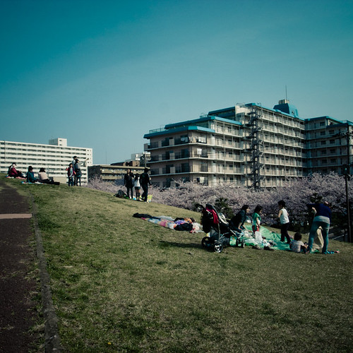 Picnic on the Hill with Cherry Blossom Row