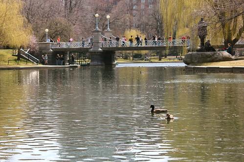 Ducks and a Bridge