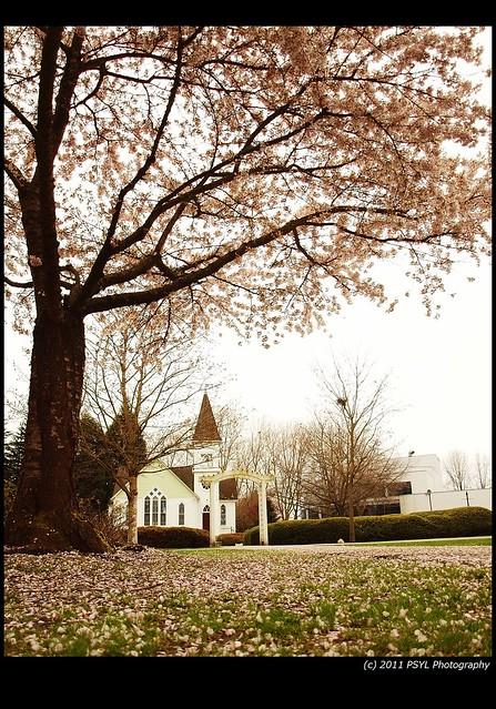 Minoru Chapel Under Blossom