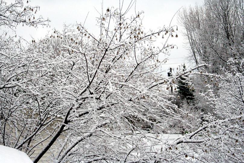 April 2011 Snow