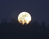 Tonight's Moonrise
