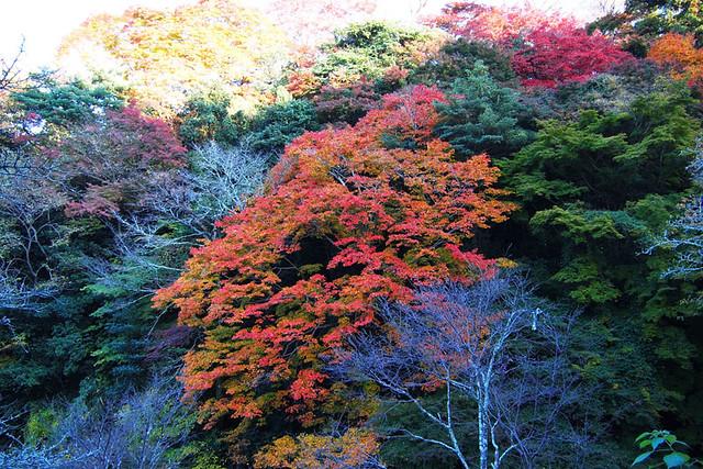 20101120_151714_吉野山