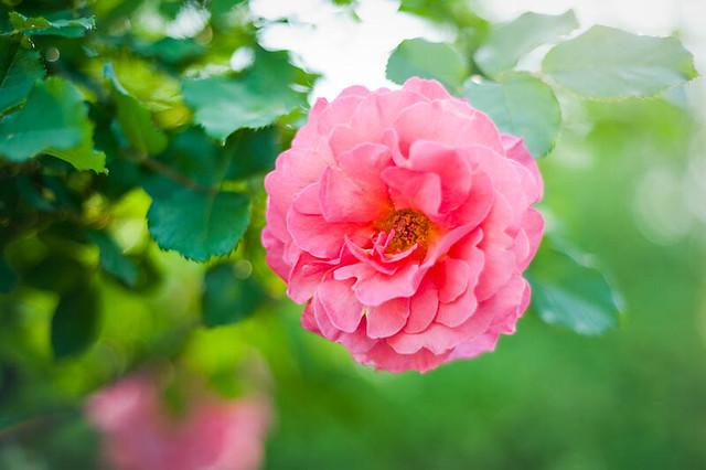 FlowerGarden2011-4