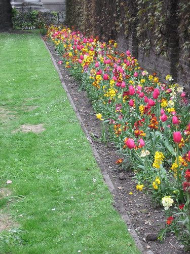 Tulips and Flowers in London