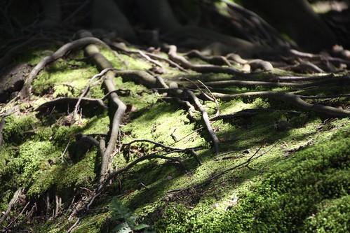 伸びる根と影