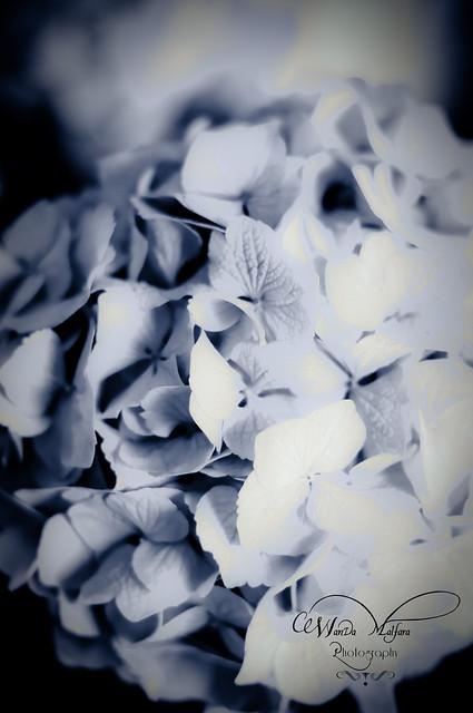 Flowers 015 blog