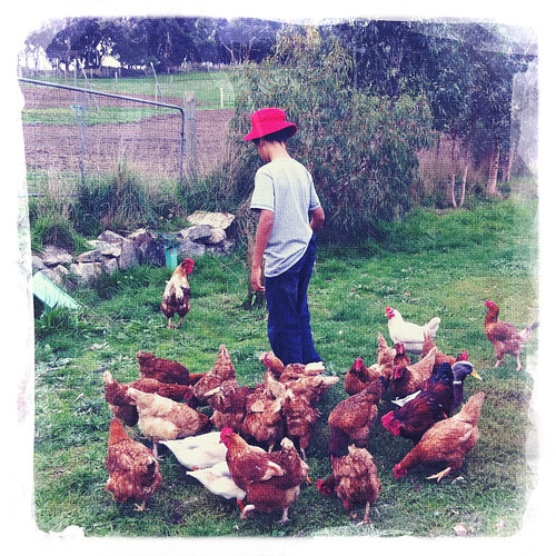 Feeding the chooks. Day 148/365.