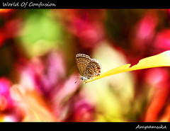 World Of Confusion /  (AmpamukA) Tags: world baby color up animal butterfly insect weird leaf chaos close natural o background center confusion      ampamuka