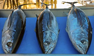 wild albacore tuna, Steveston Fish Market, Richmond