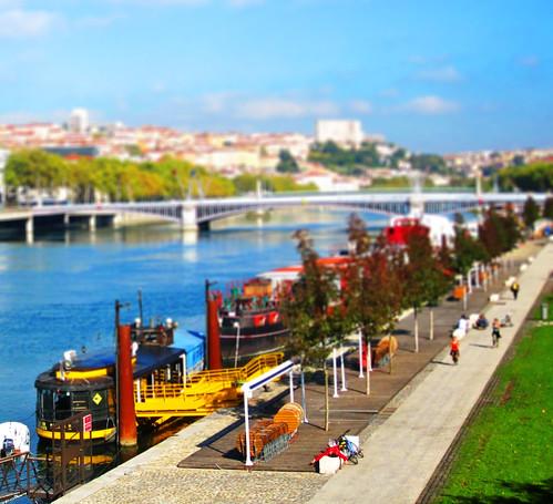 Miniature Lyon