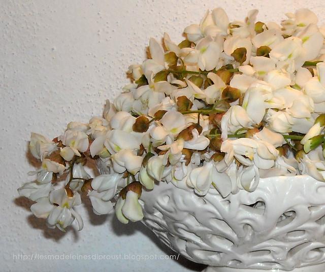 fiori-di-acacia