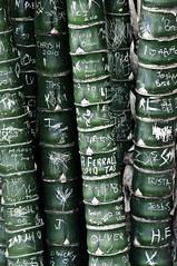 Bamboo Graffiti (Alex_v1.1) Tags: white green graffiti nikon bamboo names pinnacle d90 flickrchallengegroup flickrchallengewinner thepinnaclehof tphofweek115