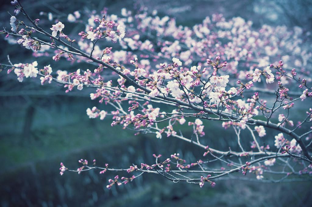 Aichi, Japan 2011/03