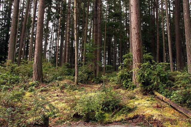 IMG_3574 Whidbey forest