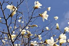 _DSC22381517100 (pirka-makiri) Tags: japan sapporo hokkaido