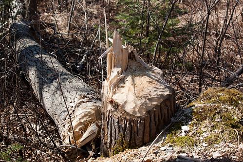 Beaver Pond 5 (1 of 45).jpg
