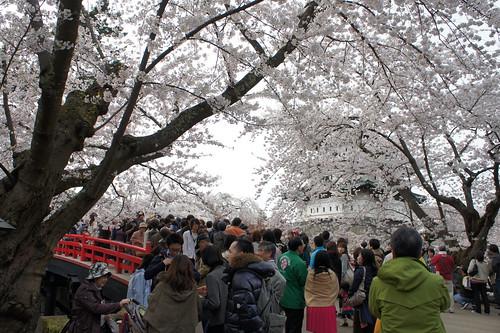 The most popular spot for posing for photographs in Hirosaki Sakura Festival