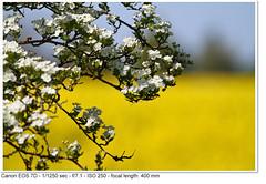 2011_05_01_1826 (John P Norton) Tags: flora blossom manual f71 ef100400mmf4556lisusm 11250sec focallength400mm canoneos7d copyright2011johnnorton