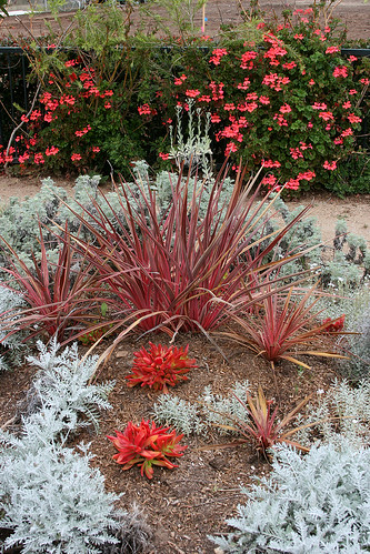 huntington red grey plantings