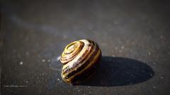 With the energy of the innocent... (Vicktor Abrahams) Tags: canon energy canon20d energie innocent snail slime hoogeveen slak slijm vicktor onschuldig bramsivic