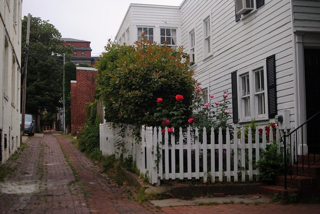 georgetown picket fence