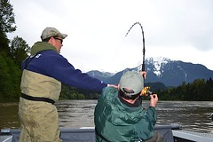 Keith's Sturgeon2 (Great River Fishing) Tags: fish fishing flyfishing trout fraserriver sturgeon steelhead slamon
