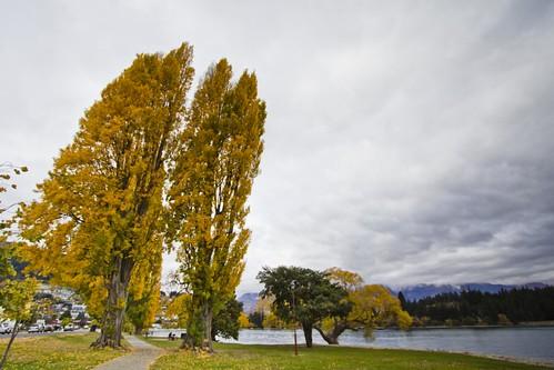 Amazing trees 1
