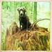 Roxie at Pacific Spirit Park