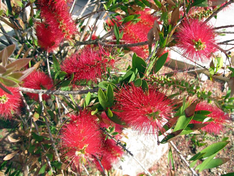 Flores vermelhas // Red Flowers